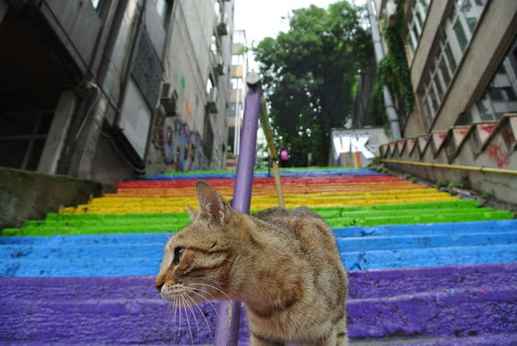 Cat at Rainbow Stairs Istanbul