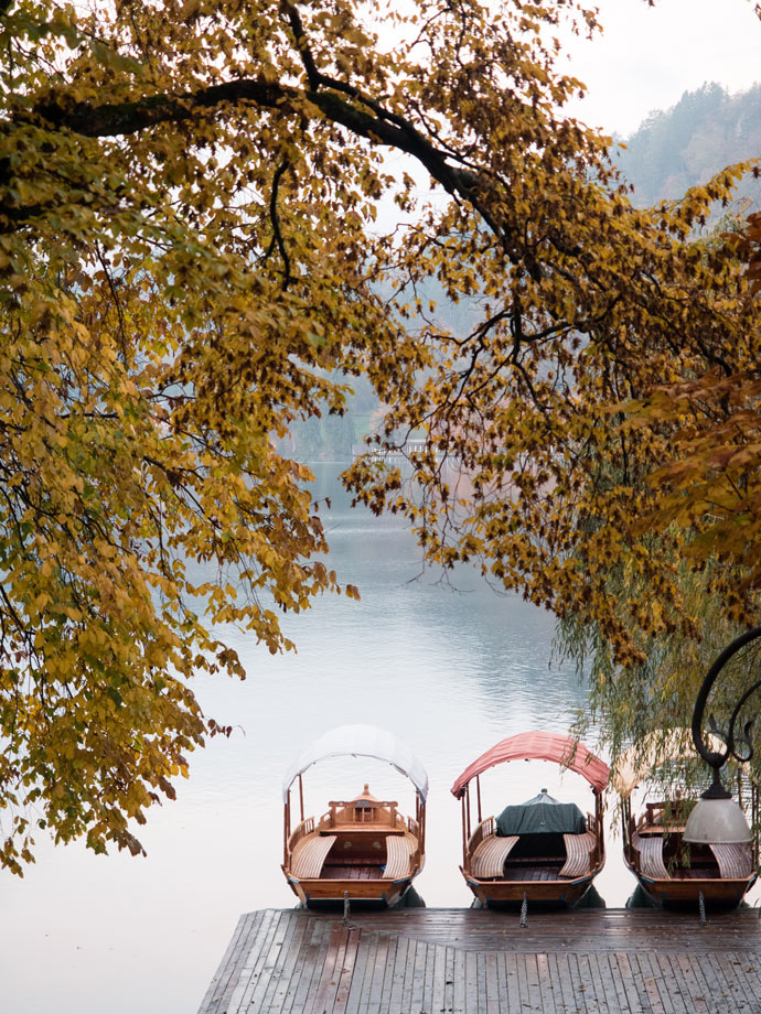 Autumn Lake Bled row boats