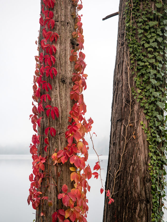 Flowers on trees, Lake Bled