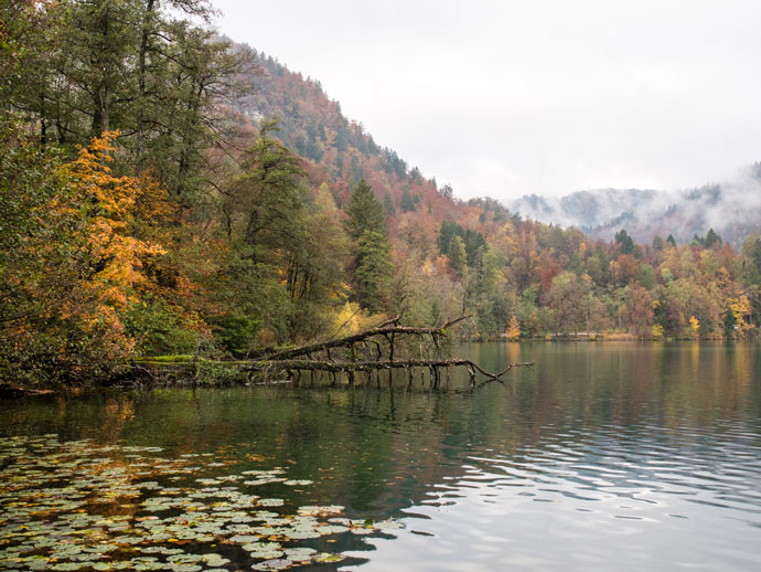 Lake Bled Autumn