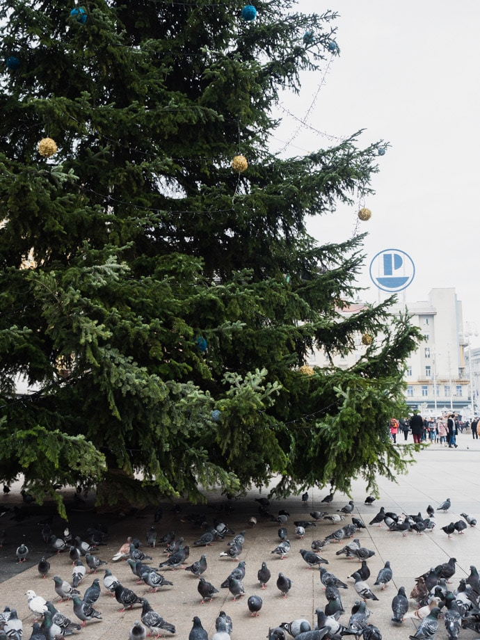 Ban Jelacic Square Christmas Tree Zagreb